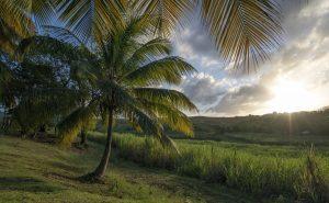 MSC1318295_Destinazione_Caraibi