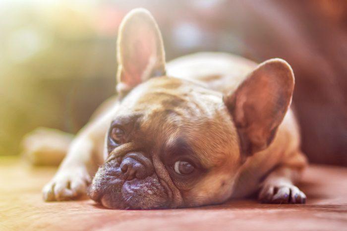 Come gestire l'ansia e lo stress dei cani