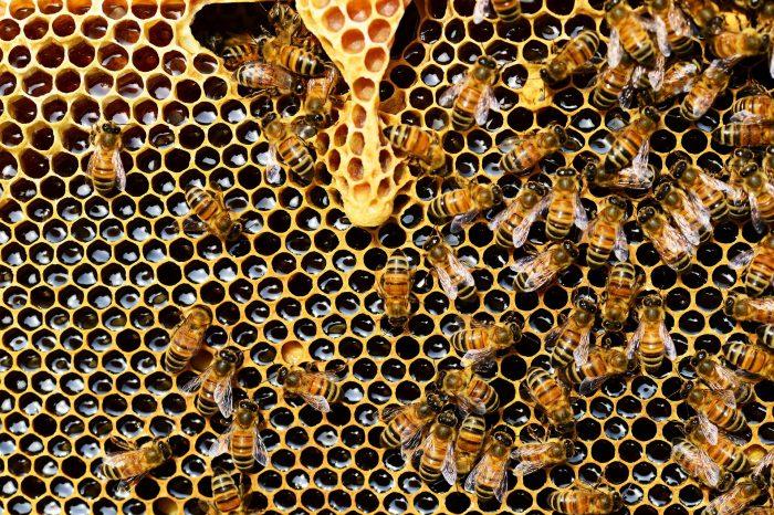 I pesticidi fanno da contraccettivi per le api: è allarme