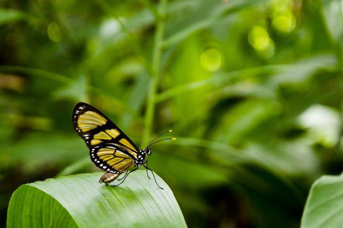 Piante e animali in estinzione: l'allarme lanciato dal WWF