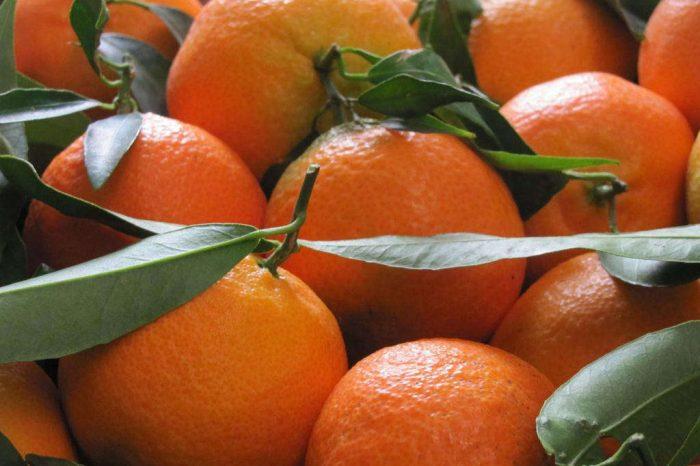 La Frutta del Conte: shopping online dalla Sicilia