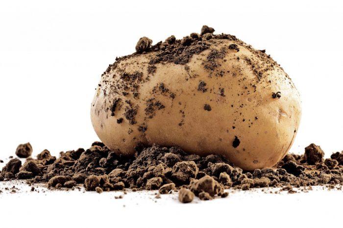 Le patate novelle: un concentrato di energia