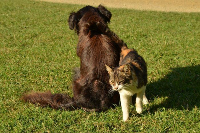 Sussidi sanitari in caso di ricovero del cane o del gatto